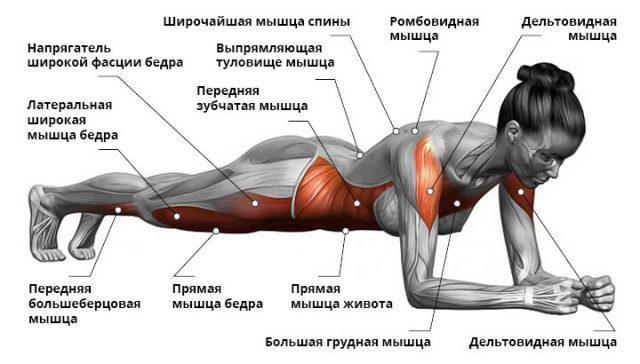 Польза упражнения планка для здоровья и похудения