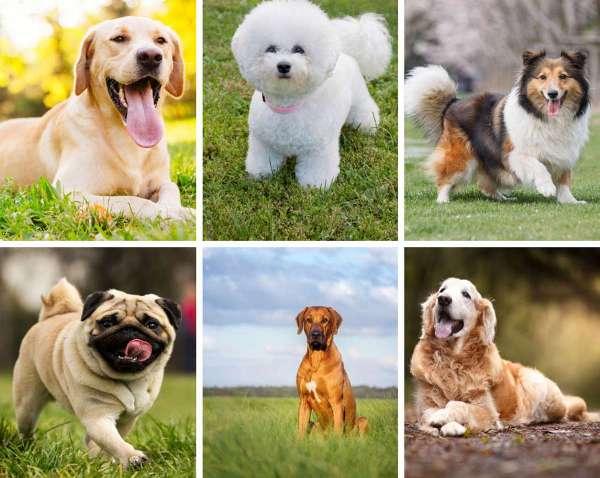 Тест какая ты собака