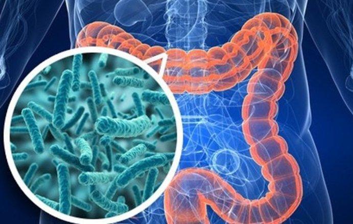 Как заселить кишечник правильными бактериями