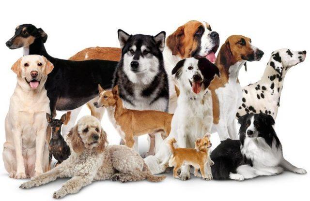Характер по породе собаки