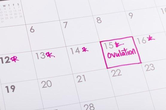 Календари зачатия ребенка - как рассчитать овуляцию, пол ребенка