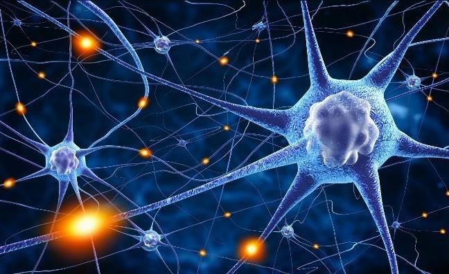 Работа нейронных связей