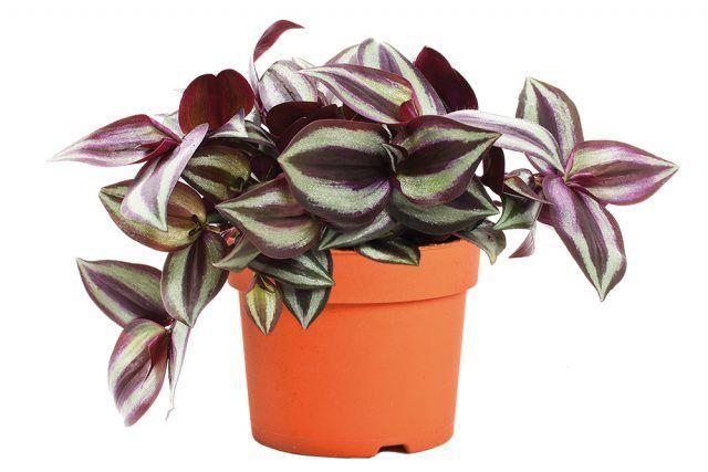 Выбираем комнатное растение по знаку зодиака
