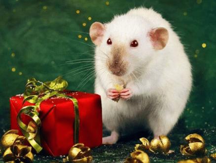 год белой крысы