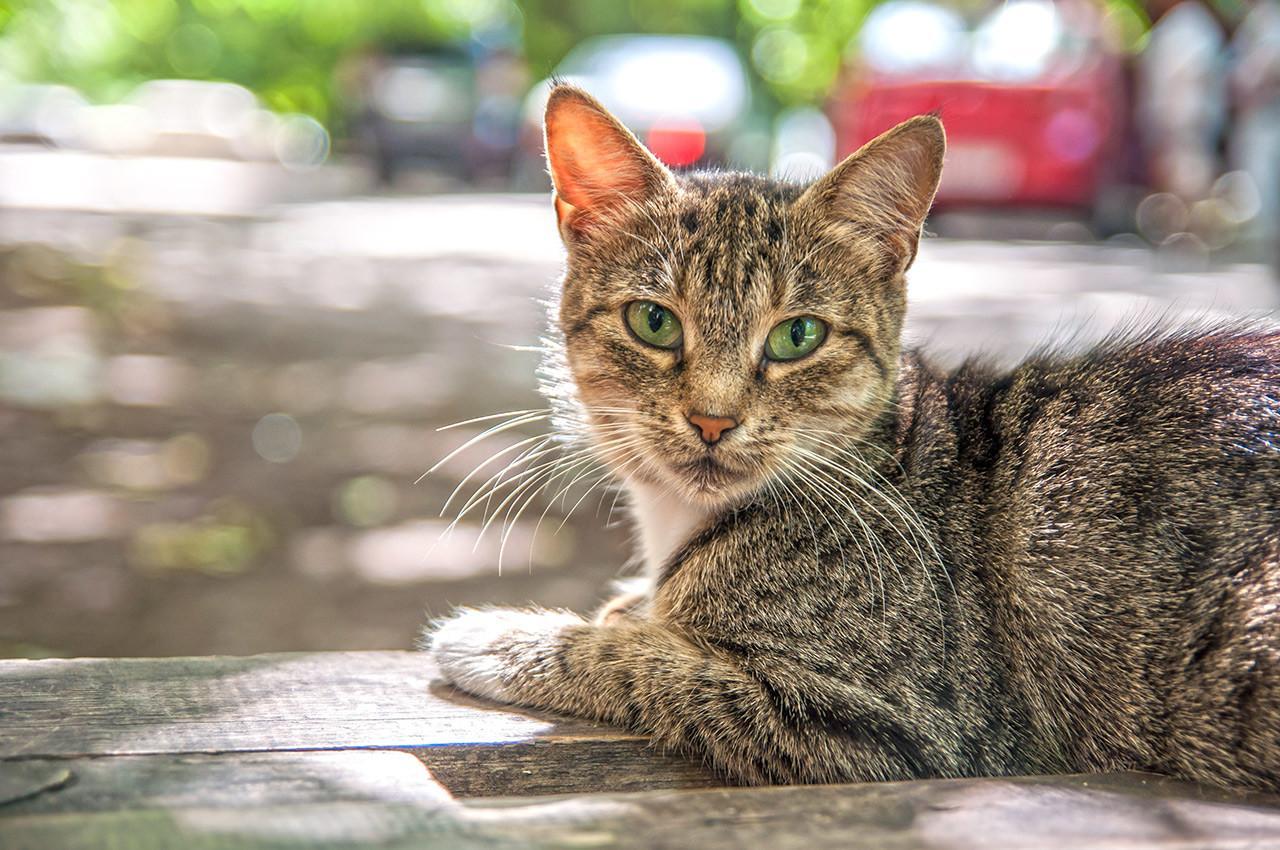 Кошка Маликова