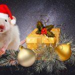 Вещи в год Белой Металлической Крысы
