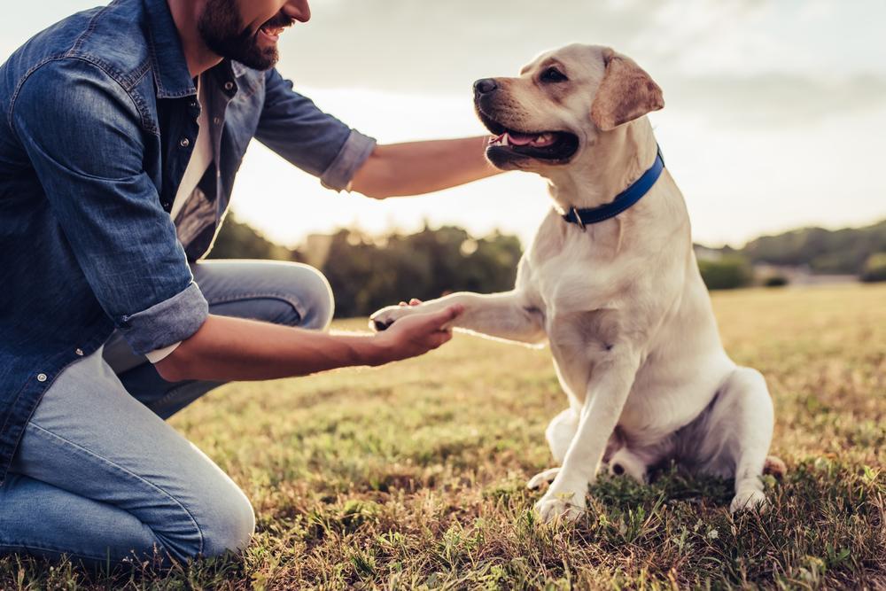 игра с собакой