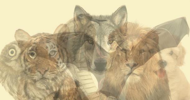 тест животные