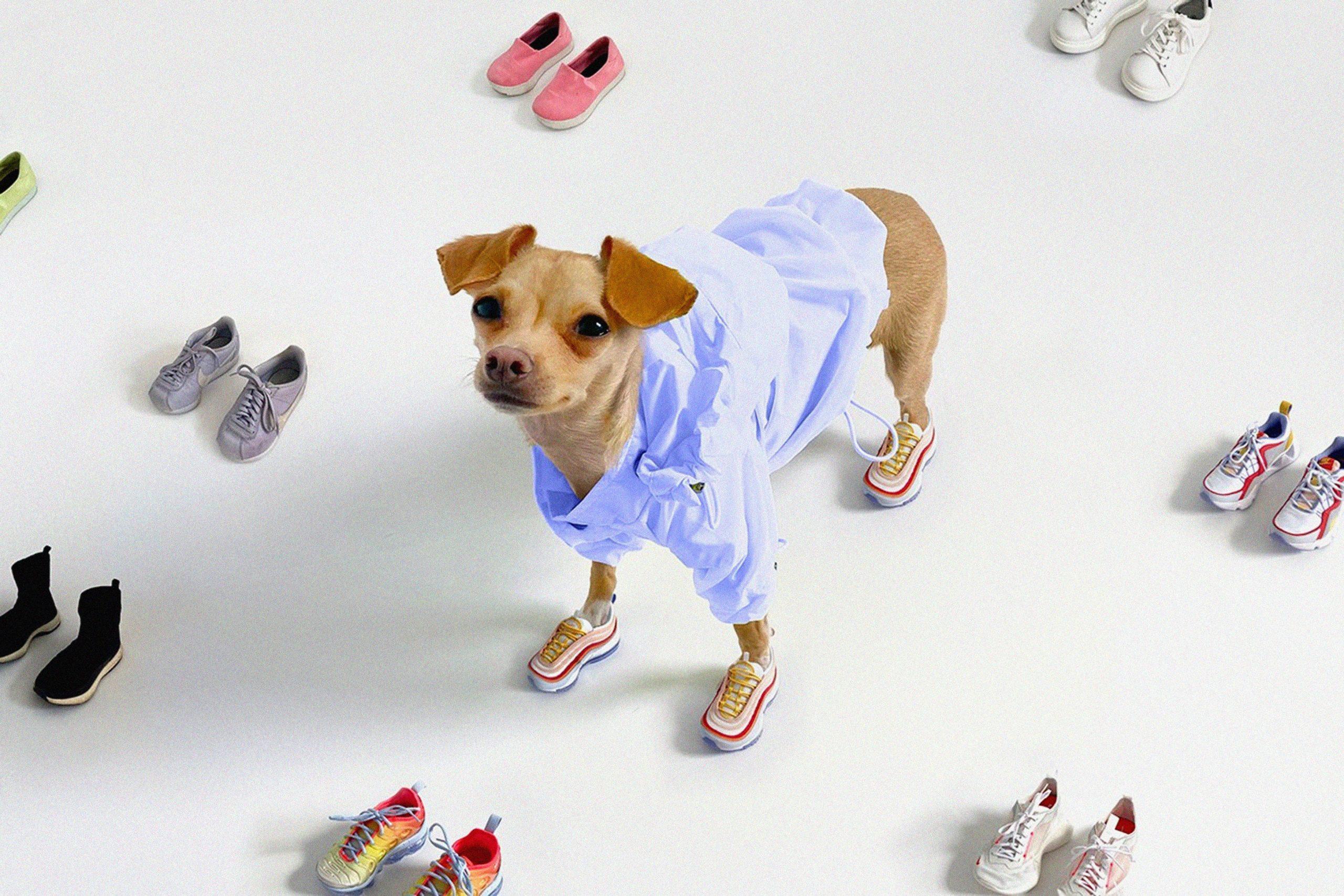 Стильная собачка Буби Билли запустила свою линию одежды:  крошечные сумочки и шарфы для стильных людей