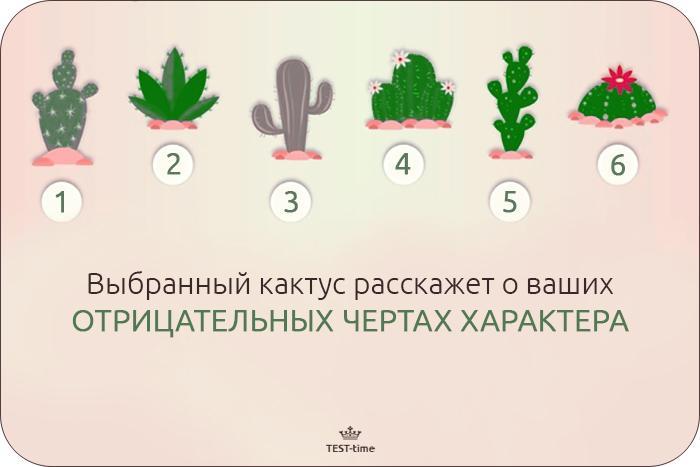 тест-кактус