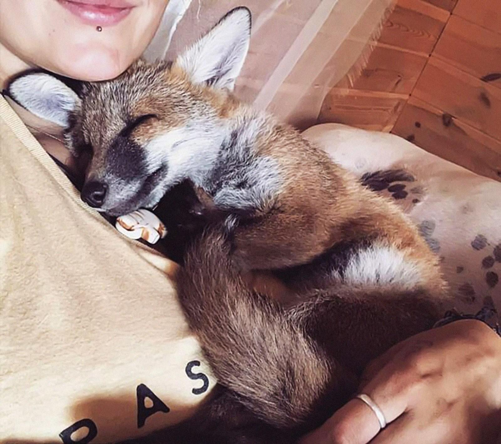 «Лис и пёс»: девушка спасла лисёнка и он стал лучшим другом её собаки