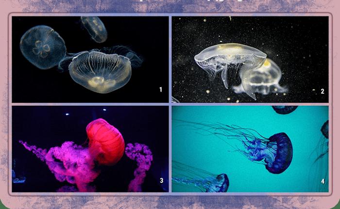 тест медуза