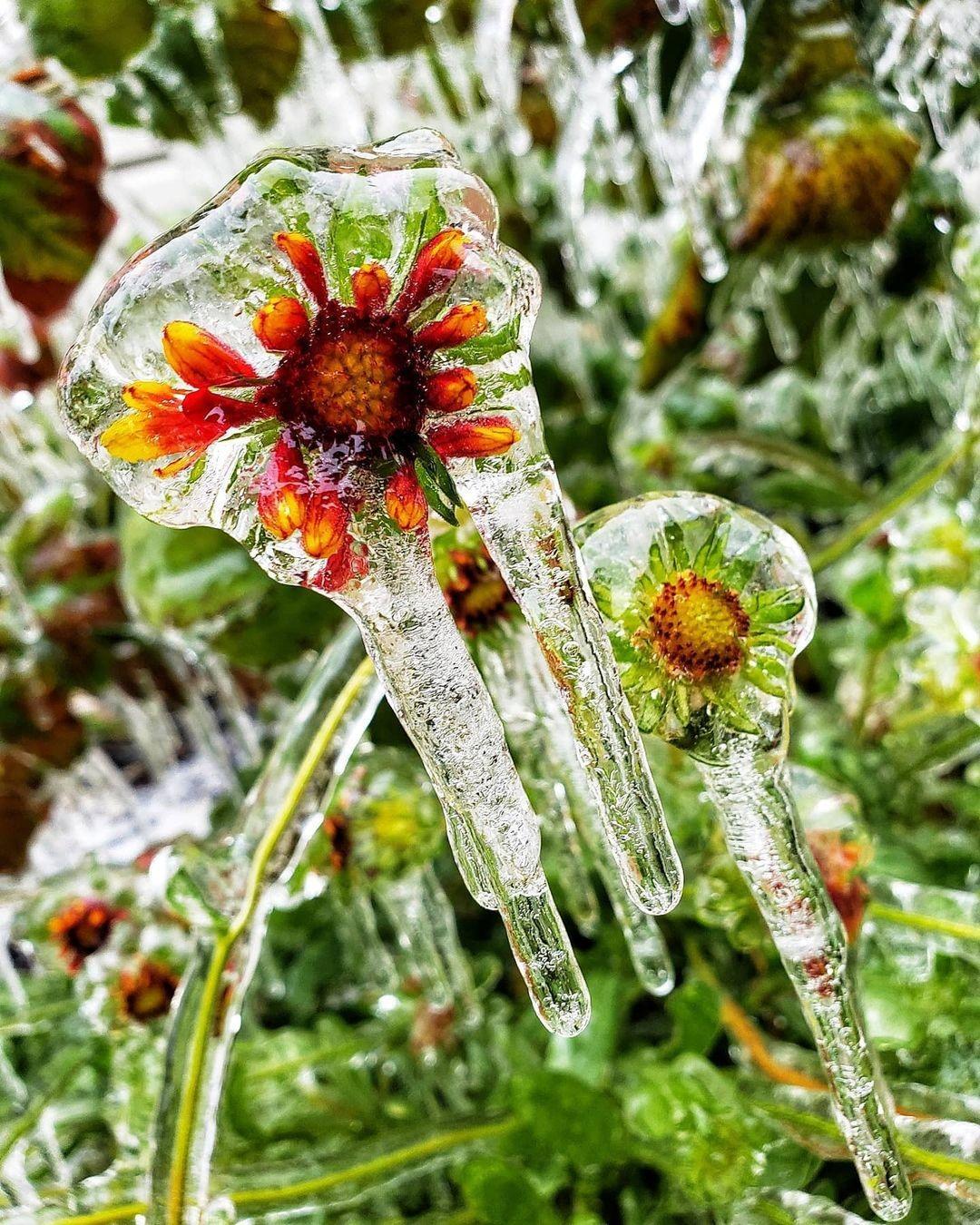 Застрявшие во льду: 20 красивых фотографий, доказывающих, что зима — это шедевр