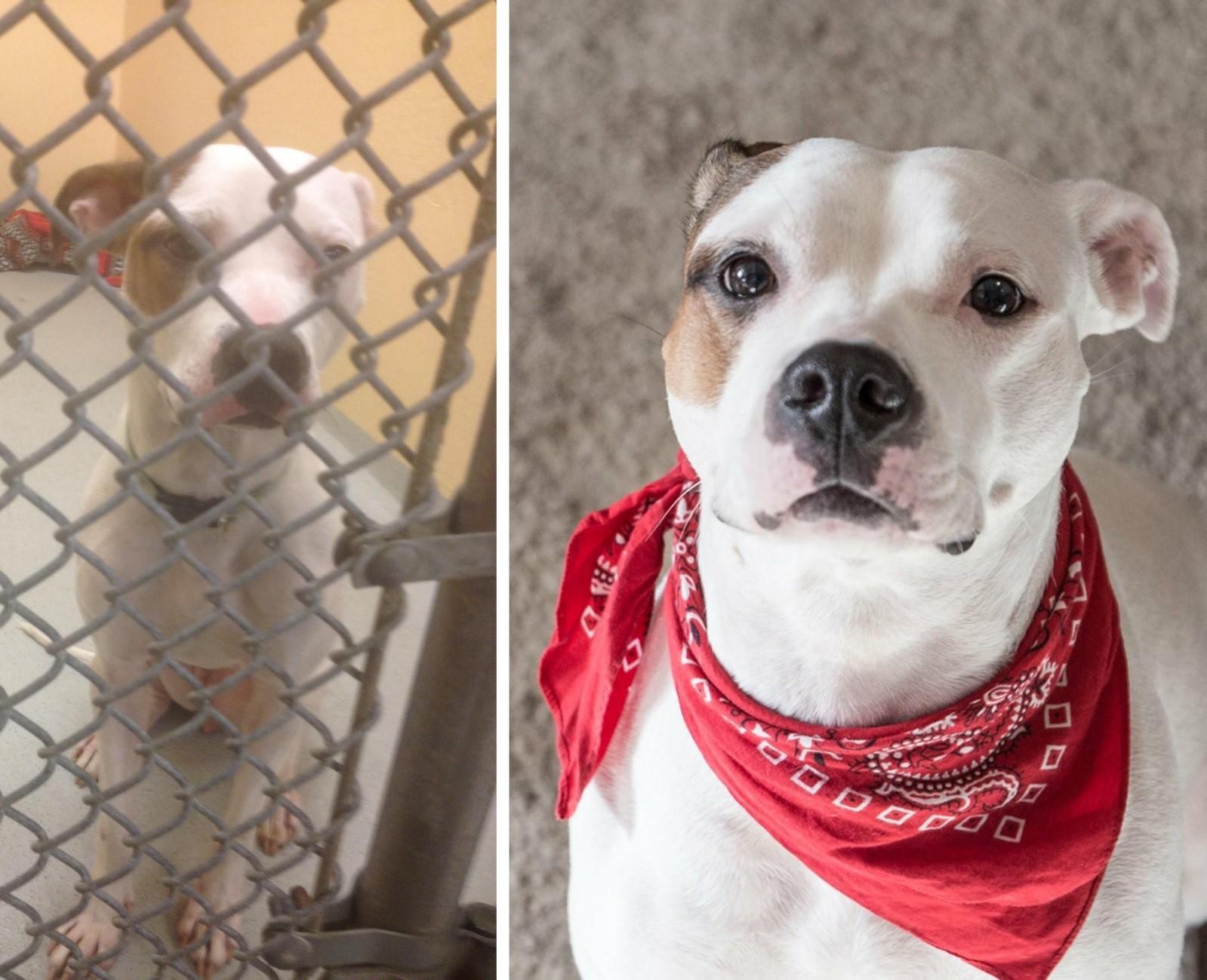 Невероятное перевоплощение: 25+ фотографий животных после того, как их забрали из приюта