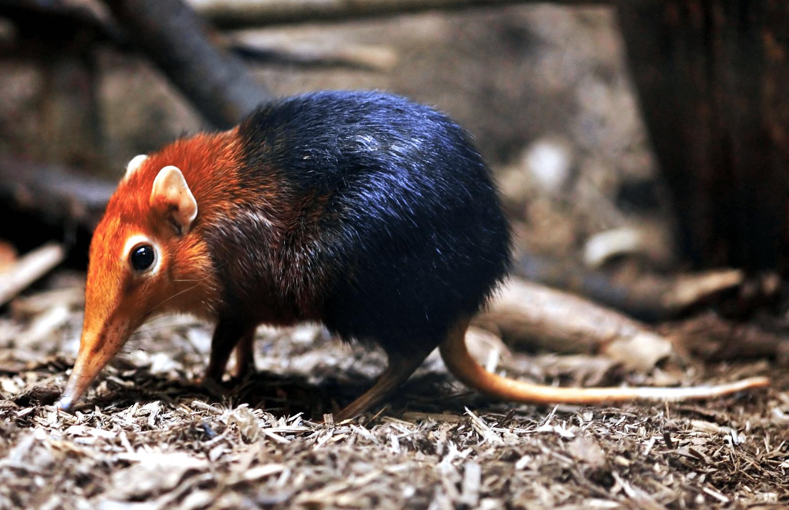 20+ самых необычных существ планеты, которые легко могут стать персонажами мультфильмов