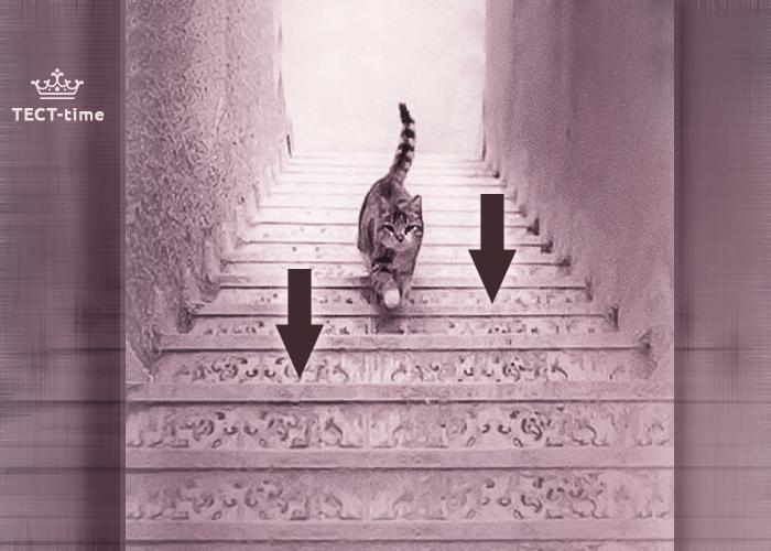 тест кот 3