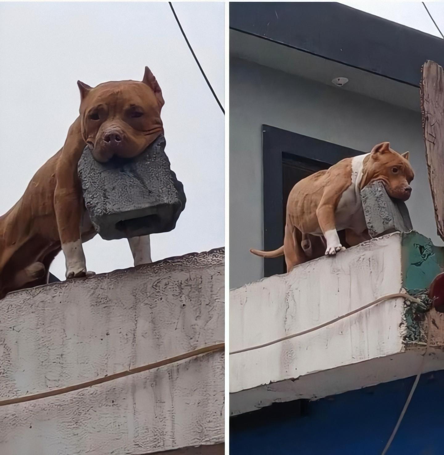 20+ фотографий, доказывающих, что жизнь с животными никогда не бывает скучной