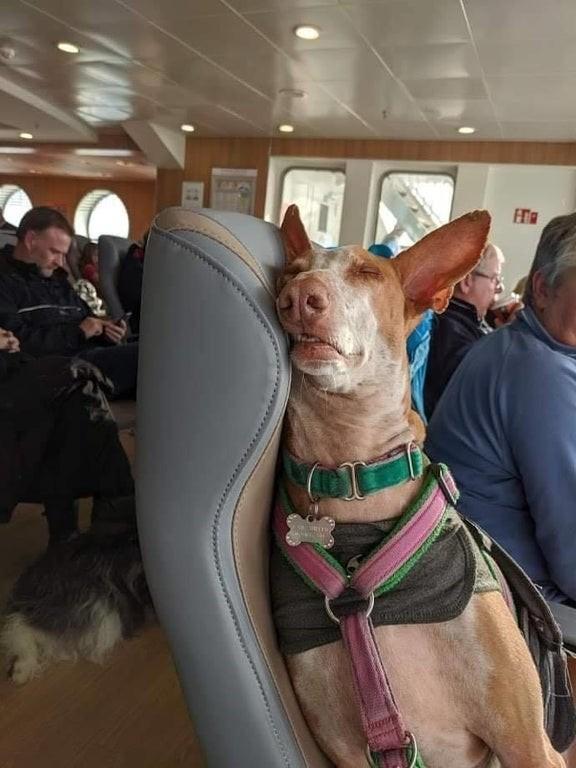 20 очаровательных питомцев, которые любят путешествовать вместе со своим хозяином