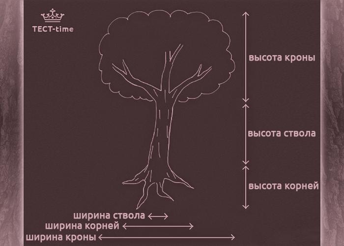 тест дерево