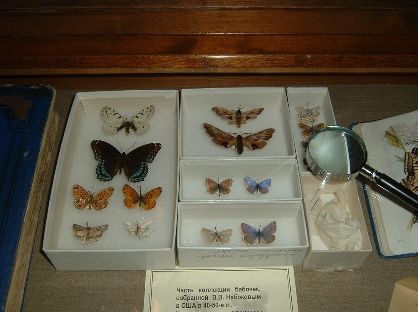 Несколько бабочек