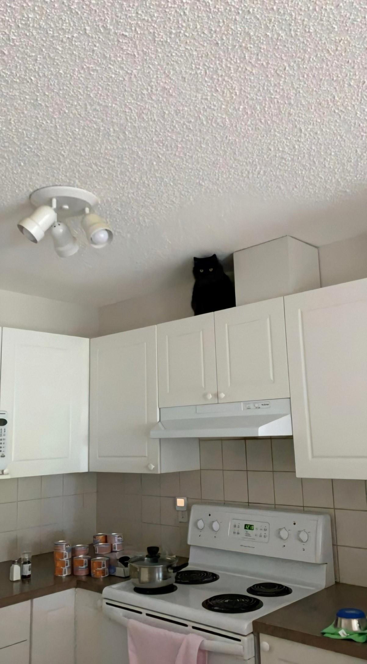 15 фотографий, доказывающих, что кошки – инопланетяне