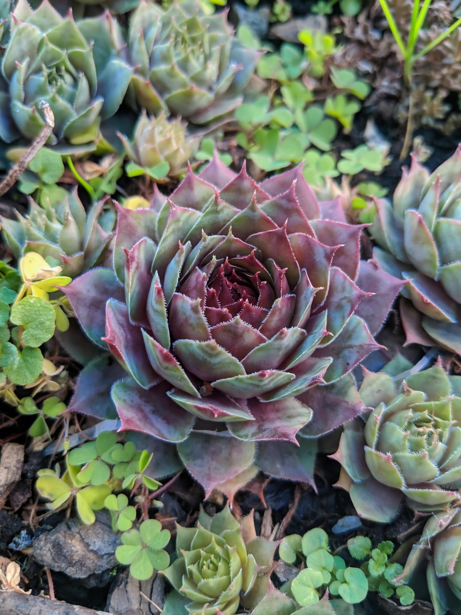 15 волшебных растений, которые идеально впишутся в мир Гарри Поттера