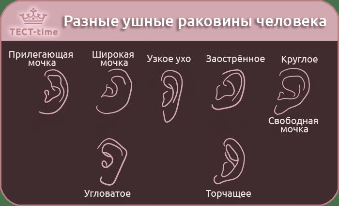 тест форма уха