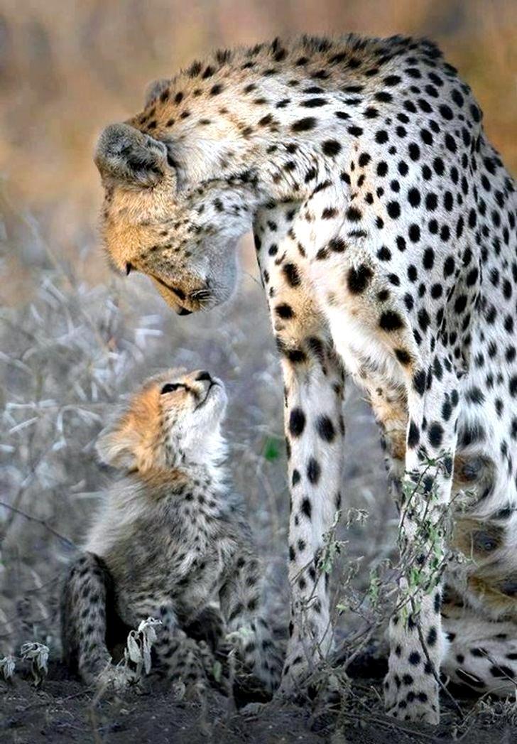 18 фотографий животных, доказывающих, что нет ничего лучше материнской любви