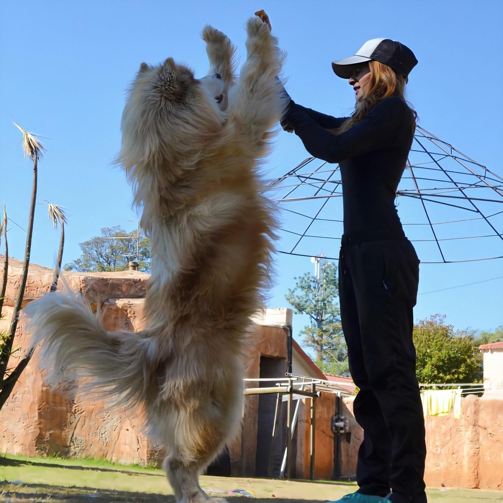 Нежные гиганты: домашние любимцы, которые поражают своими внушительными размерами