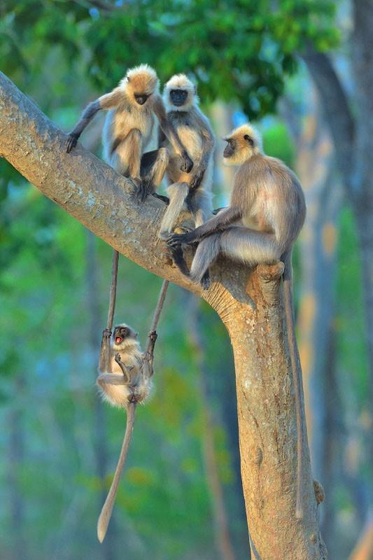 Победители конкурса Comedy Wildlife Photography Awards: самые забавные кадры из мира животных