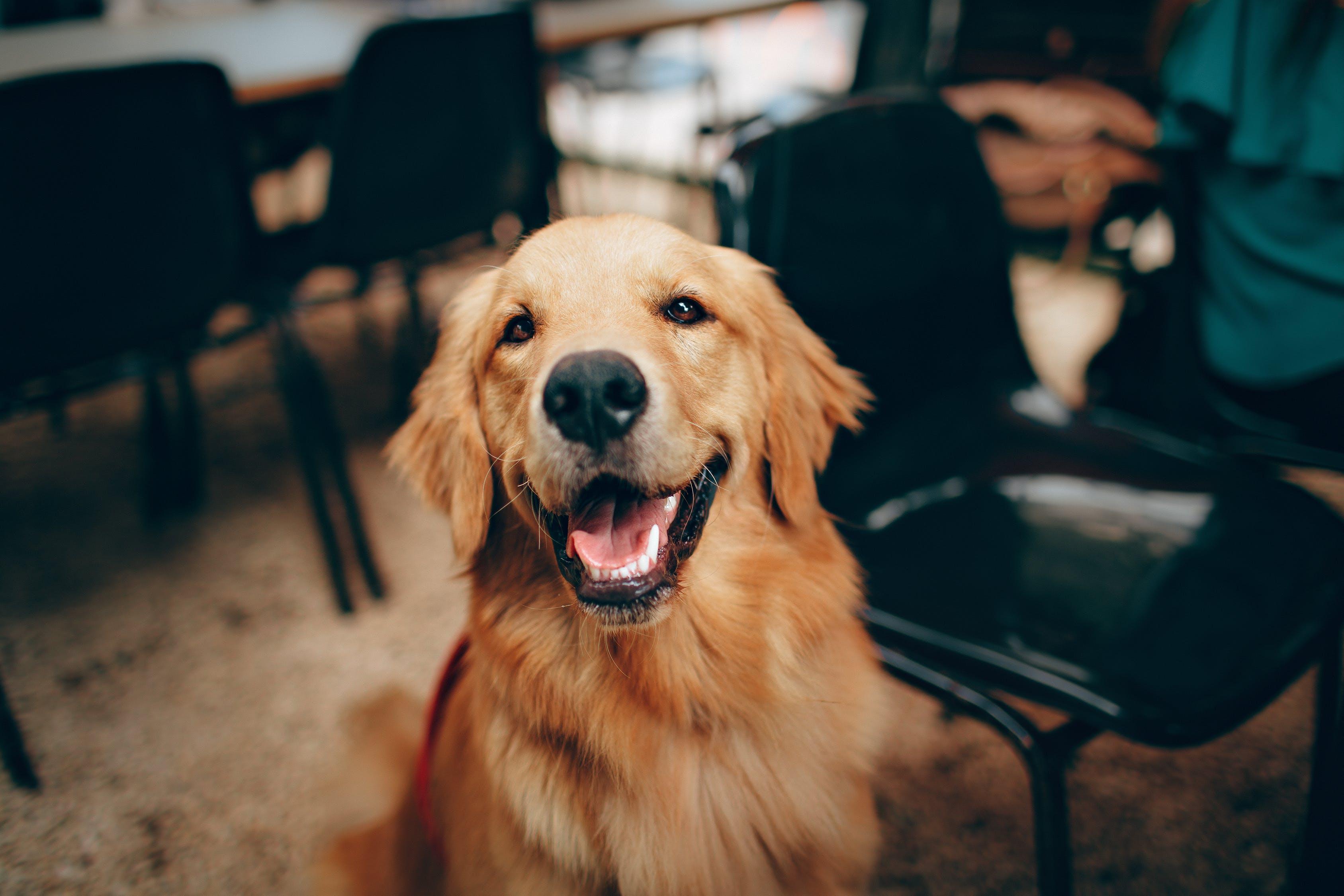 Не только верные, но и забавные: 20 фото смешных собак, от которых становится тепло на душе
