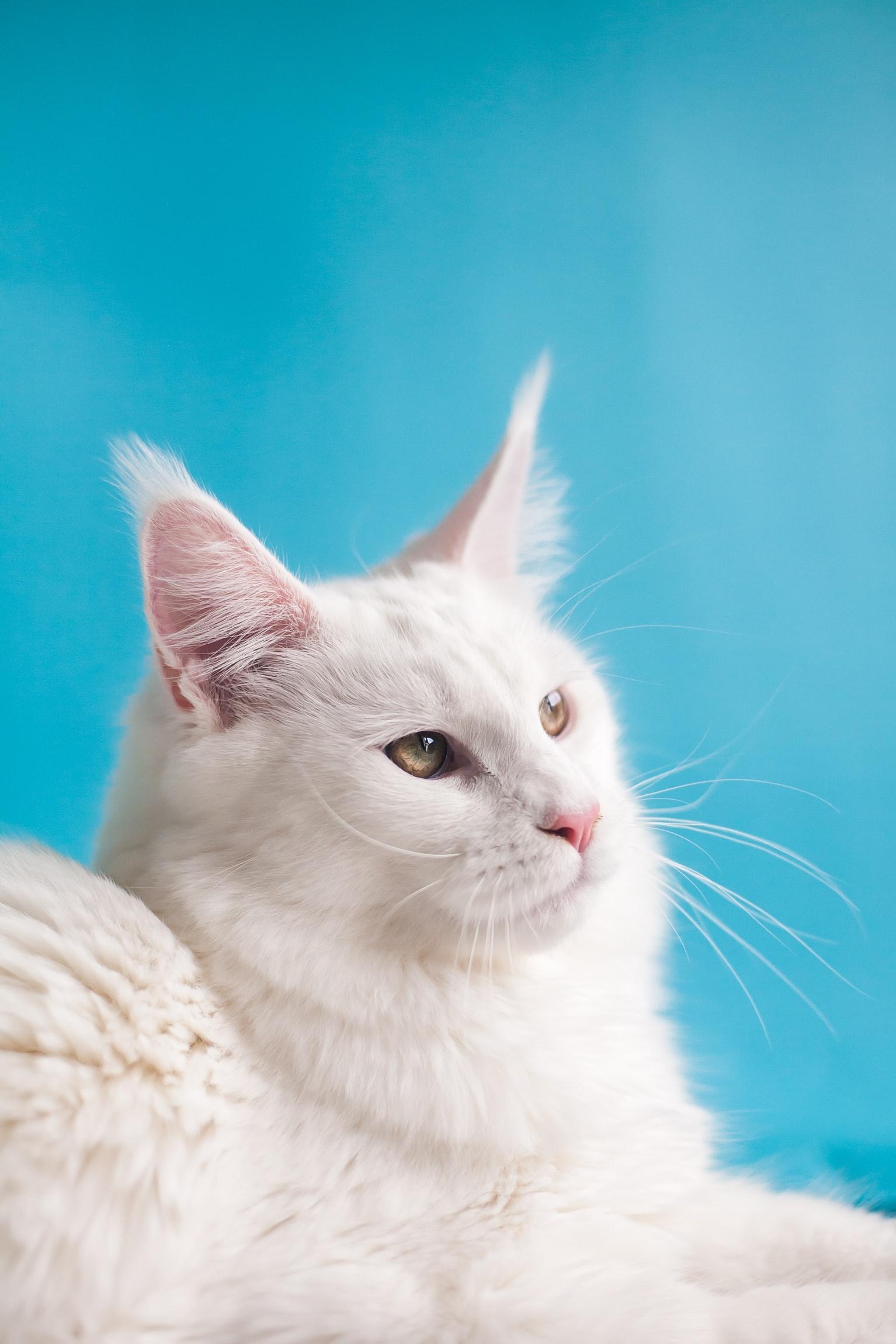Они точно с другой планеты! 25 фотографий самых красивых котов по версии Colady