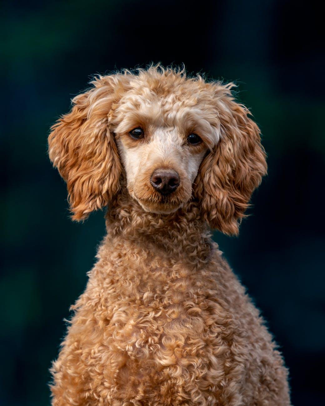 20 самых красивых собак по версии Colady