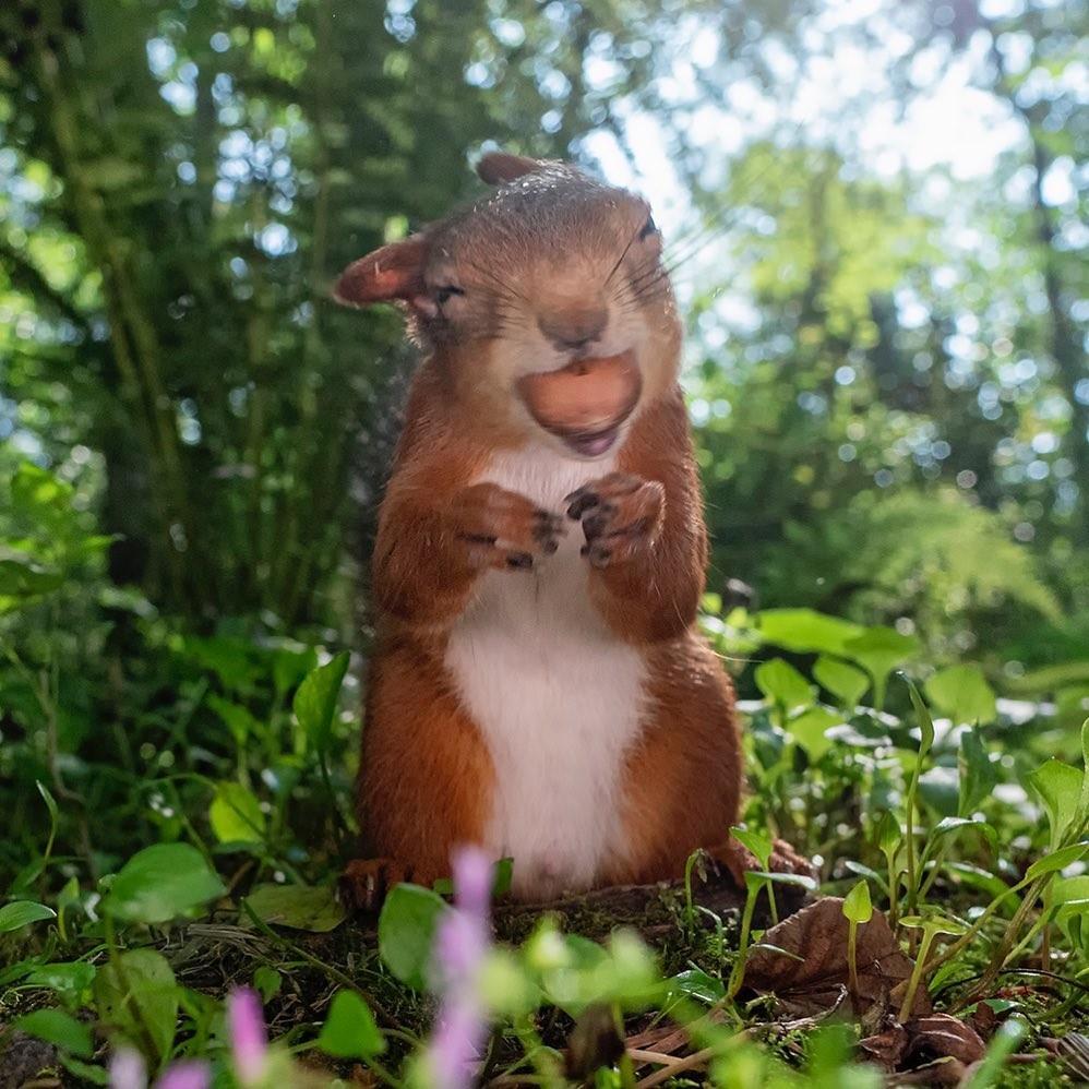 Фотограф запечатлел очарование белок, и мы думаем, что нашли своё духовное животное
